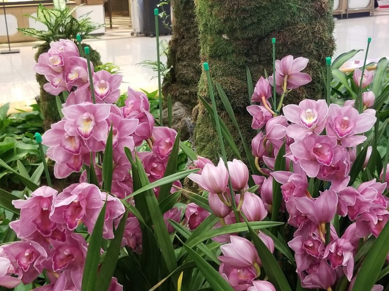 Korean Orchids