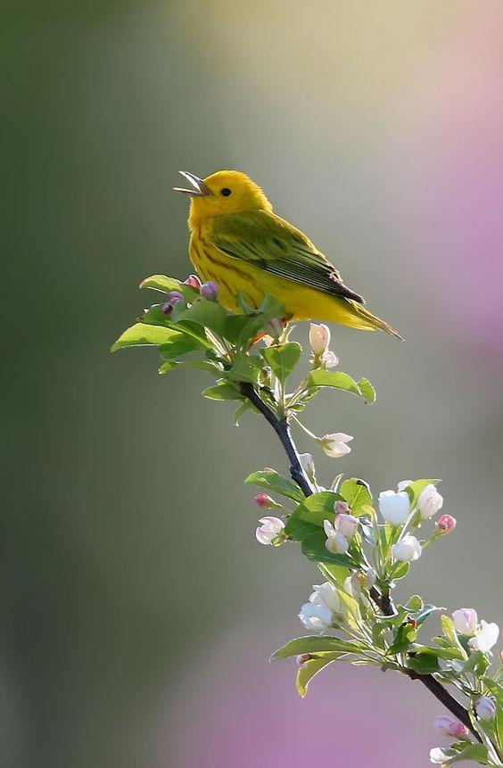Song of Spring art by Robert Blair